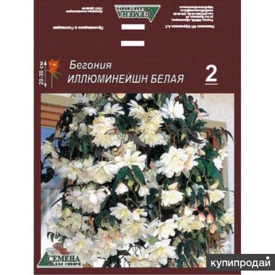 Клубни Бегония Иллюминейшн белая (Begonia Illumination White)