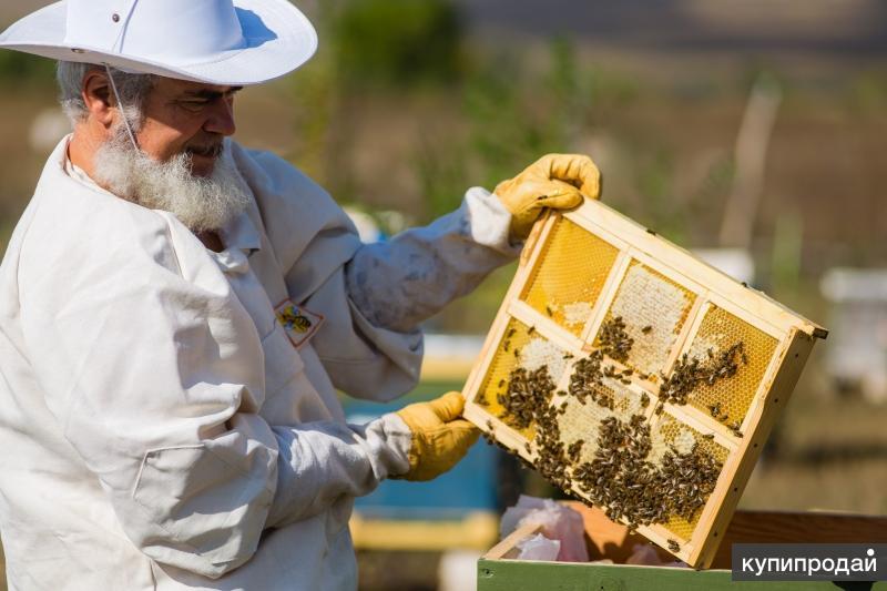 уважаемые пчеловоды картинки результат получился