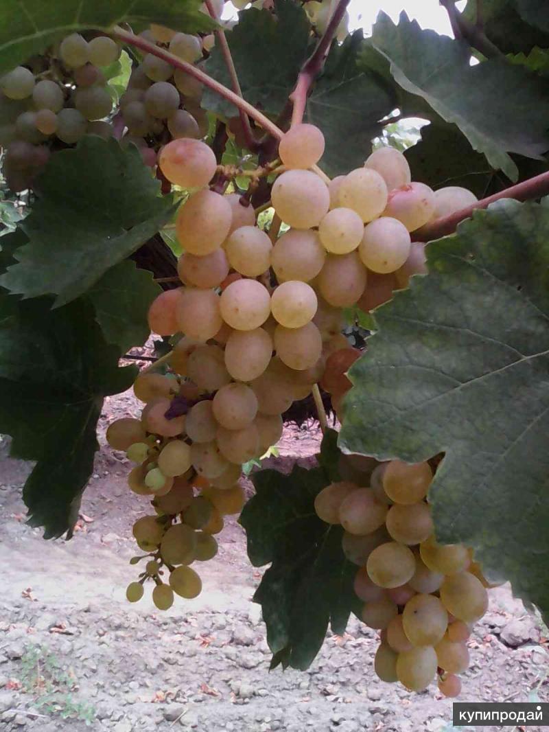 Домашнее вино - обмен на продукты