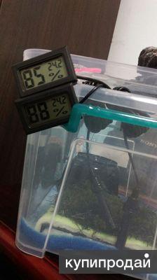 Гигрометр с термометром тгм