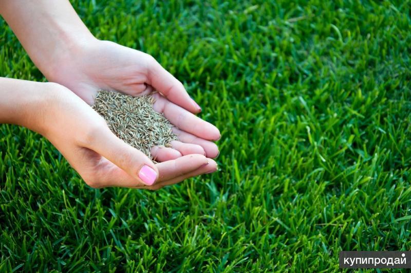 Продажа рулонного газона, семян для посева газона