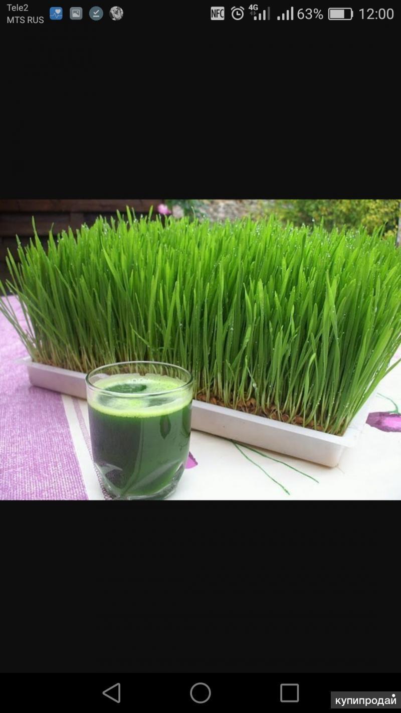 Производство траво-растений