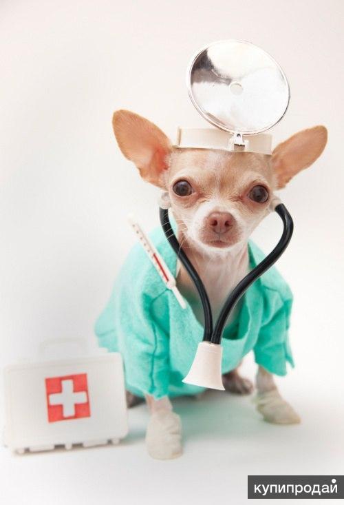 Скорая ветеринарная помощь на дому