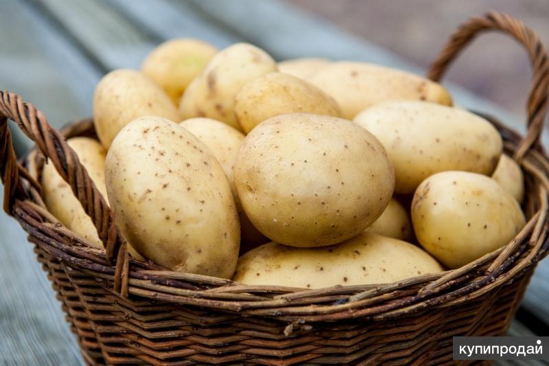 Продам картофель. Только от 10кг