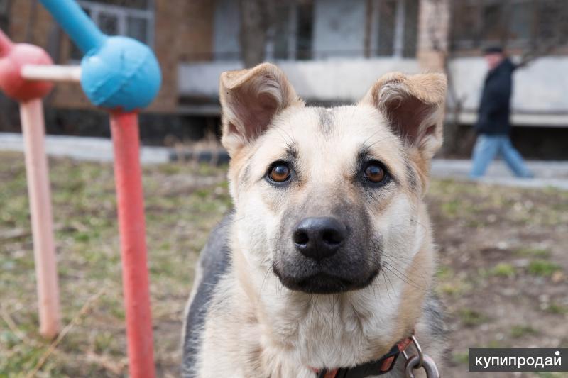 КНОПОЧКА – Небольшая, , воспитанная собачка в поисках дома.