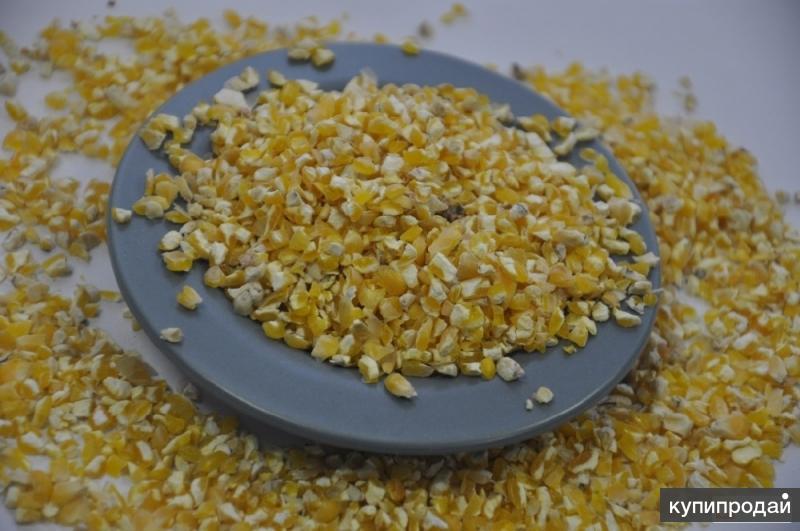 Продаю кукурузный зародыш оптом