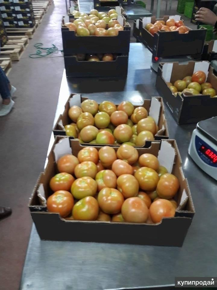 Свежие помидоры из Марокко