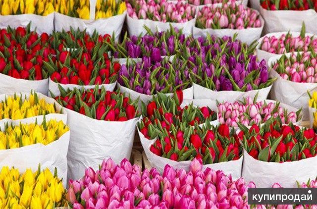 Тюльпаны к 8 марта. Крым 2019