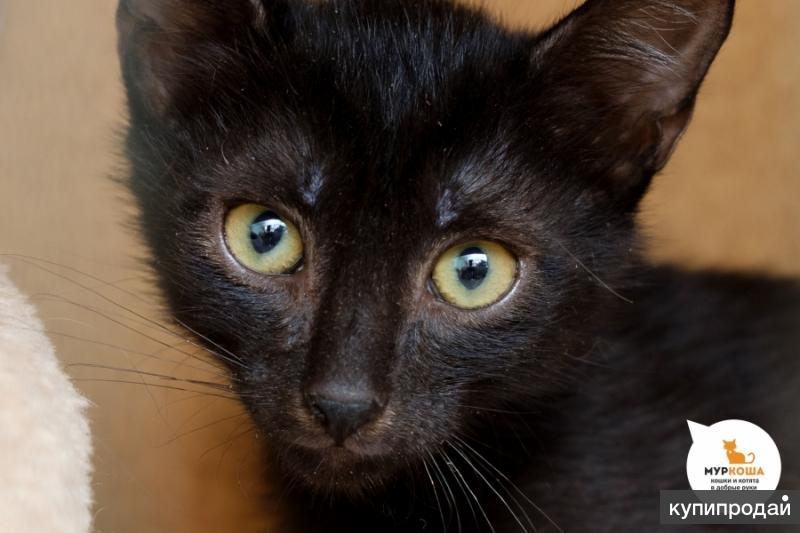 Котик Руни