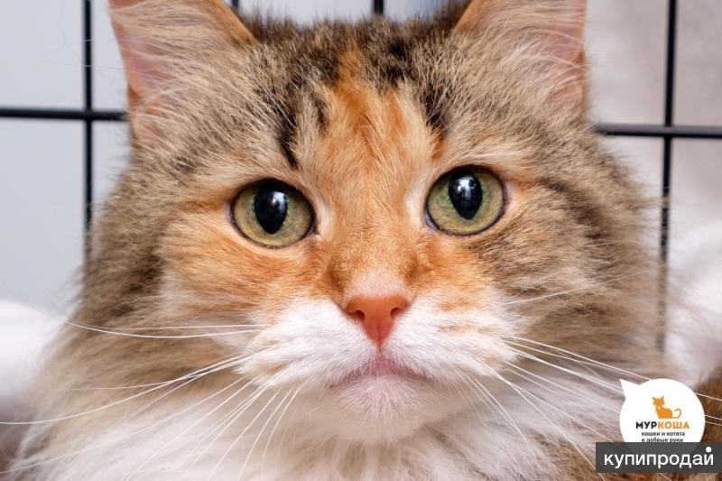 Кошечка Шелли