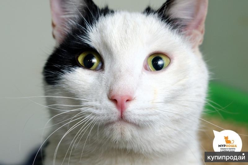 Котик Белояр
