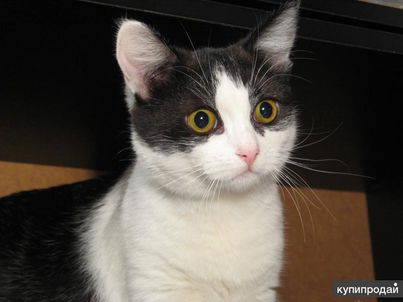 стерилизованная годовалая кошечка - кошка под ключ