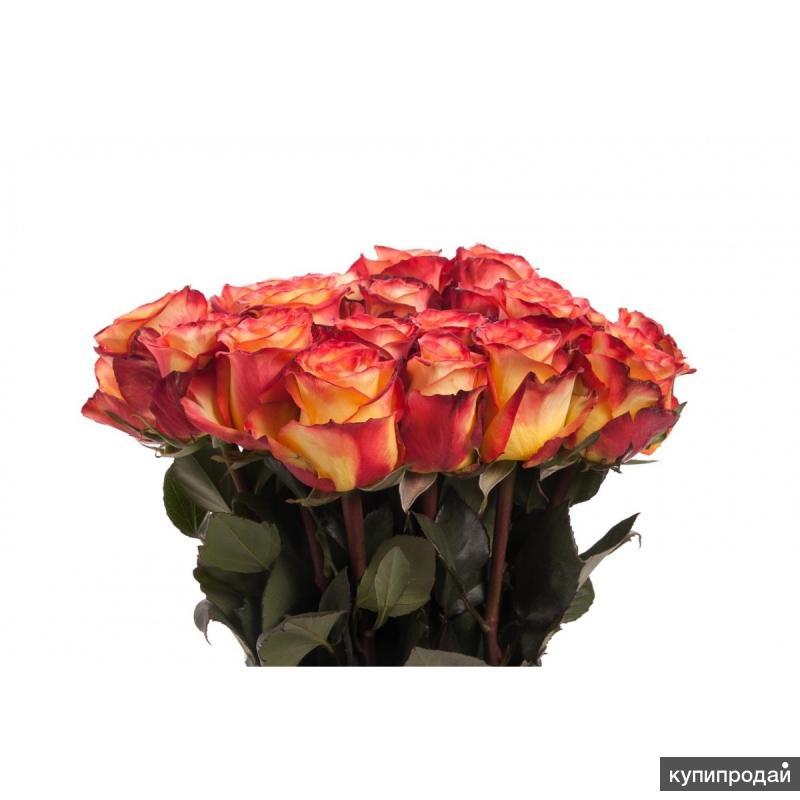 Огненные розы Хай Мэджик High Magic