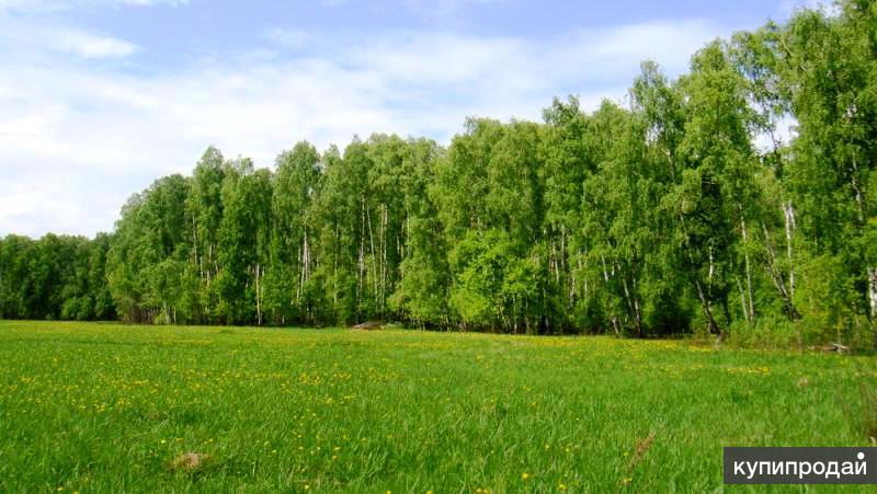 Продаётся земельный участок Московская область Чеховский район