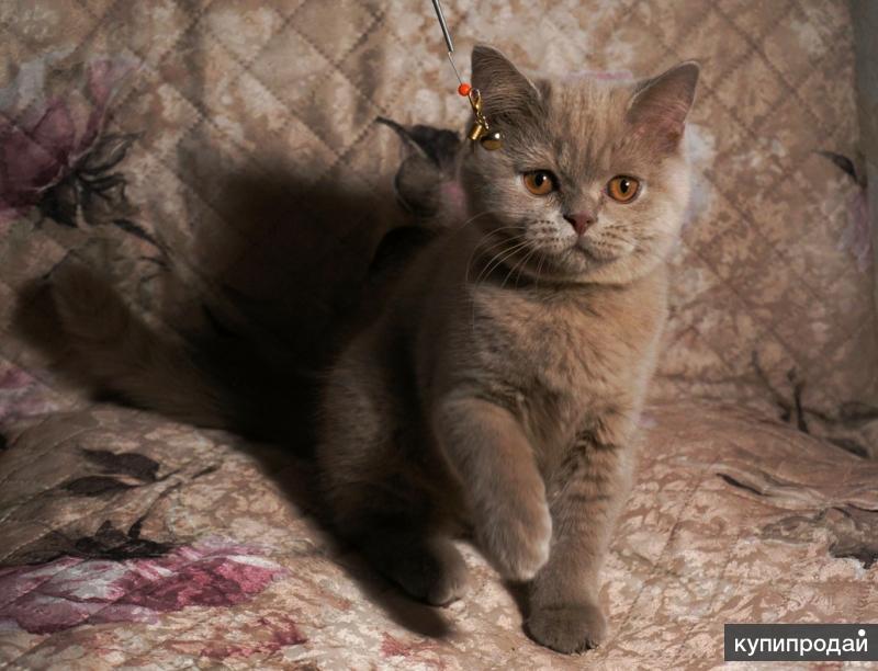 Котята из моего питомника