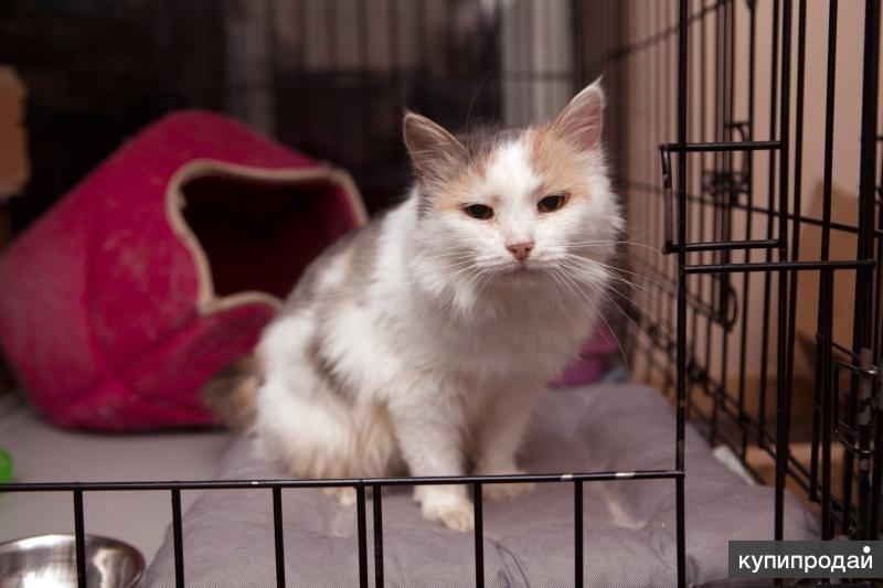 Кошечка Марика ищет дом