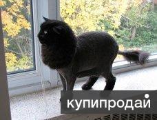Стрижка кошек без наркоза.