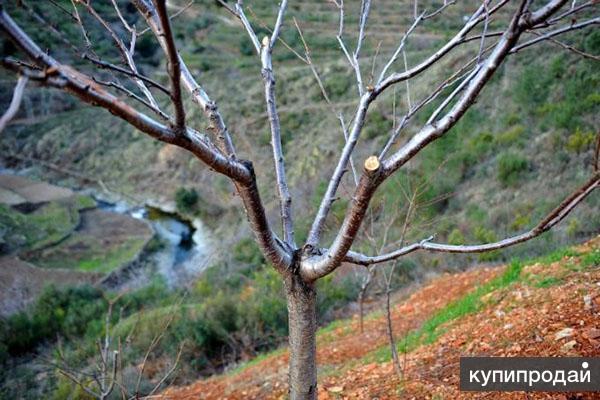 Обрезка плодовых деревьев.