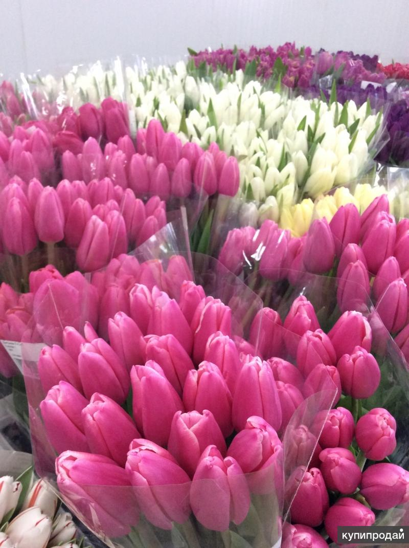 фото тюльпаны краснодар экстремально-короткие сроки
