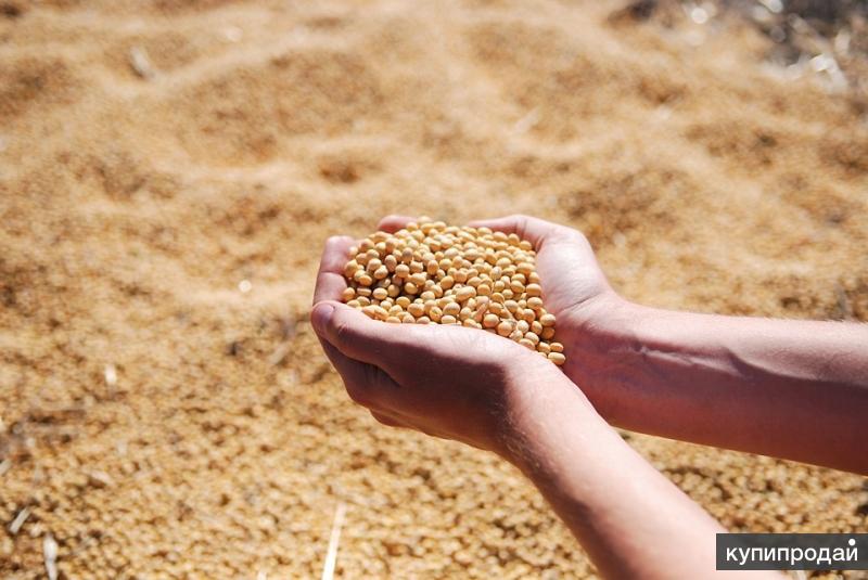 Семена сои Анастасия РС1