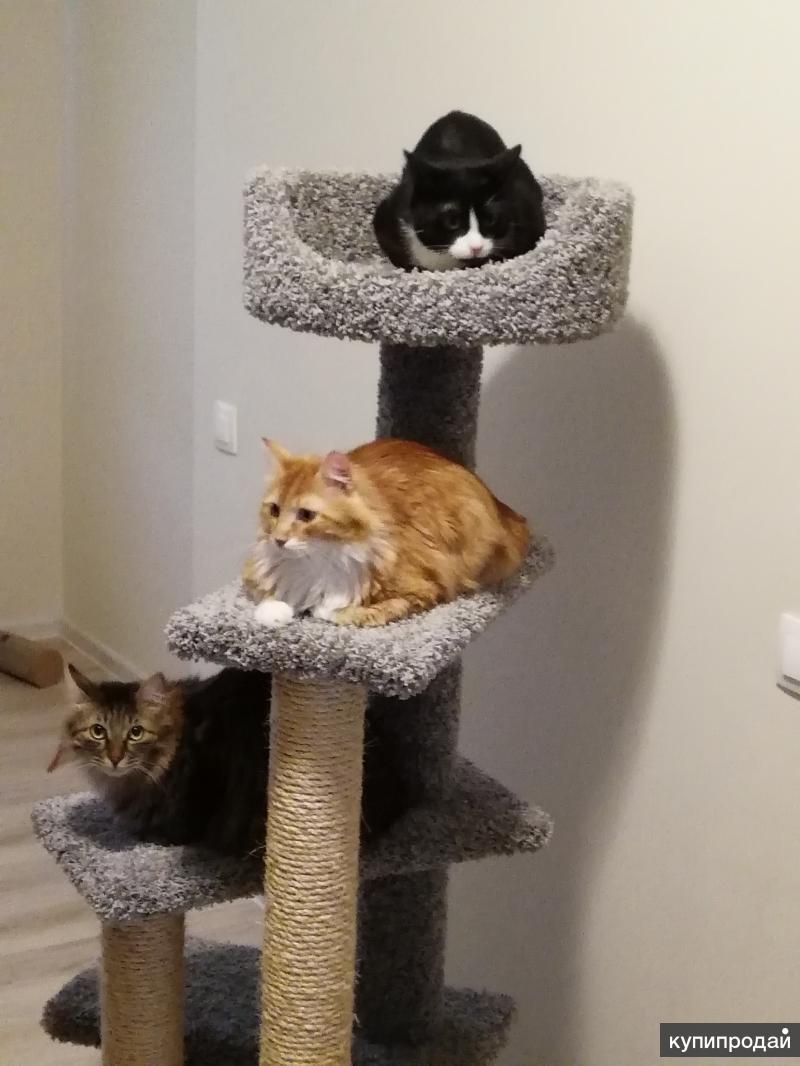 Беру кошек на передержку