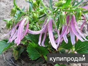 Многолетние растения почтой России