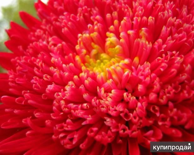 Семена домашних растений и цветов для сада