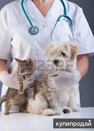 Ветеринарные услуги вызов на дом