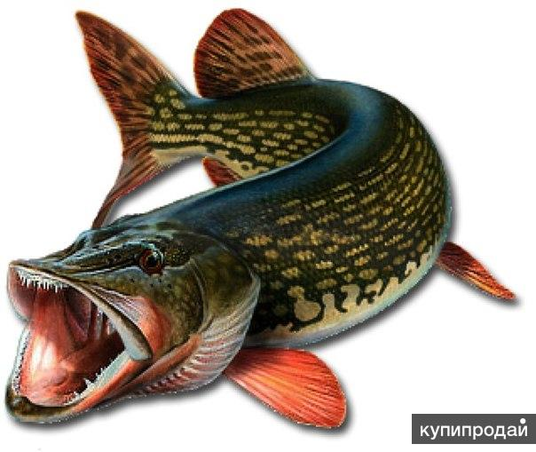 "Рыбалка на базе ""Дед Щукарь"""