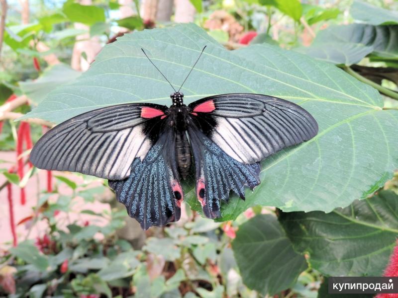 Экзотические Живые Бабочки изАмазонки