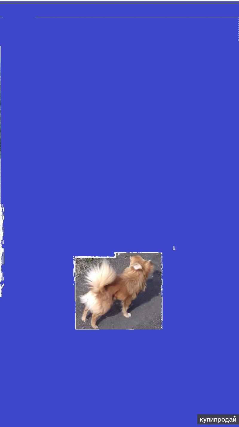 Потерялся пёс