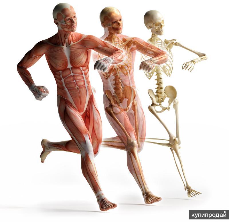 Физиология похудения человека