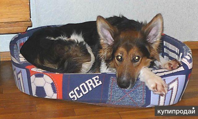Молодой красивый пес Форс ищет новую семью в дар!