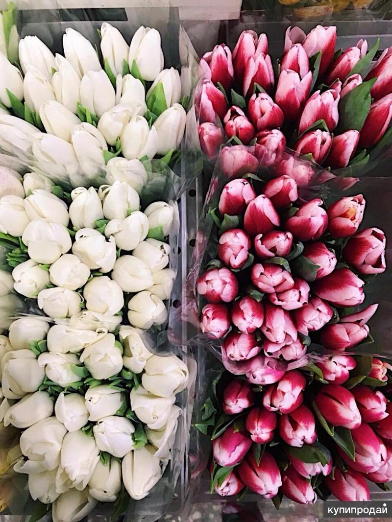 Стоимость цветы тюльпаны оптом москва, магазин