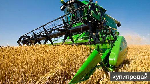 Продаем пшеницу фур./прод., кукурузу, ячмень, овес.