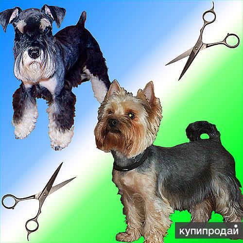 Стрижка и тримминг собак профессионально