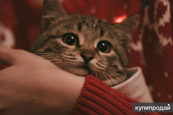 Большеглазый котёнок