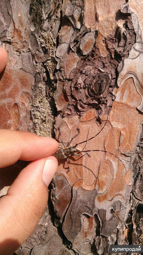 Защита леса от короеда жука-усача организация в Одинцово