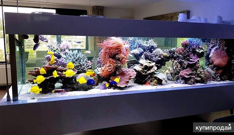Изготовление морского аквариума на заказ в Ялте
