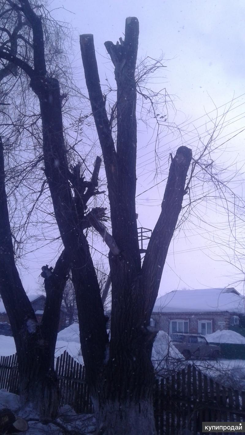 Всем здрасти предлогаю услуги по Спилу деревьев .цены разумны .