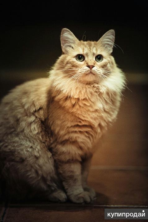 Котик Мишутка в самые добрые руки.