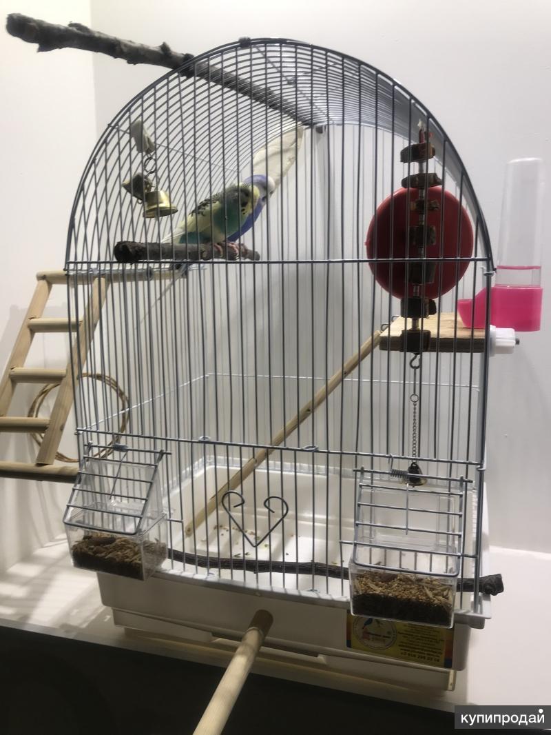 Продам двух попугаев с клеткой