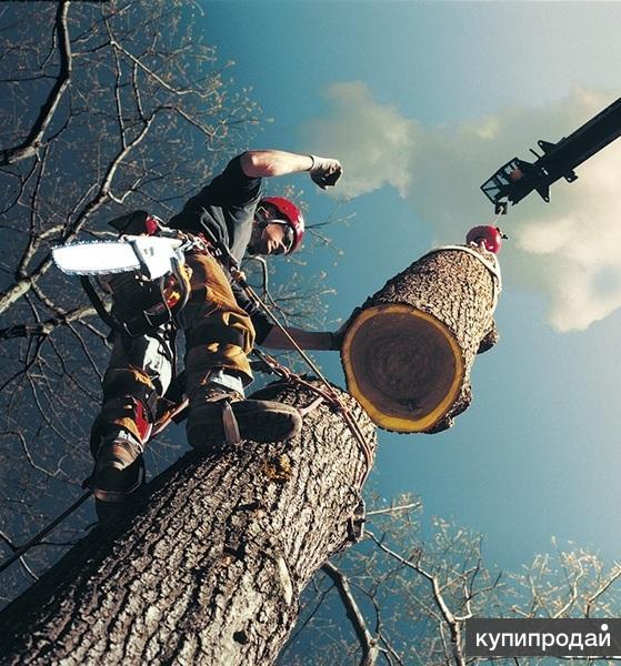 Кронирование, обрезка, спил, удаление деревьев любой сложности