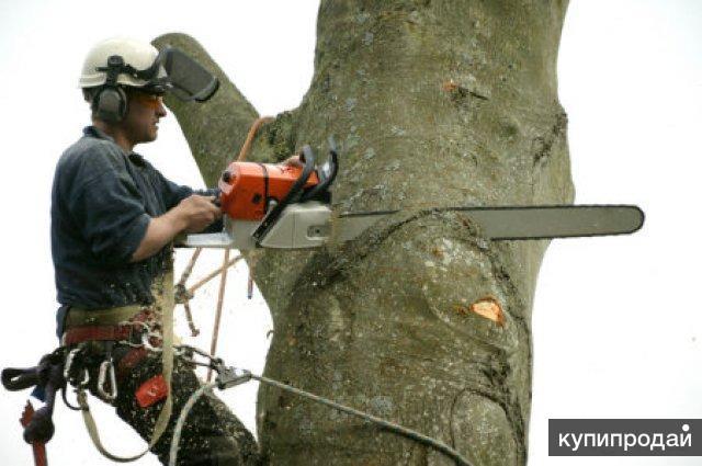 Спил Угрожающих Деревьев Недорого Быстро