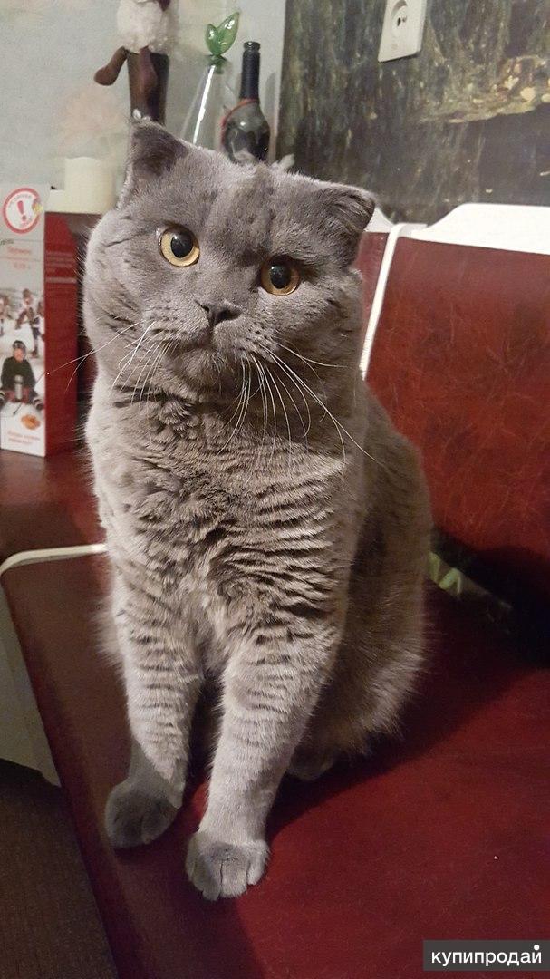 Вислоухий котик ищет кошечку