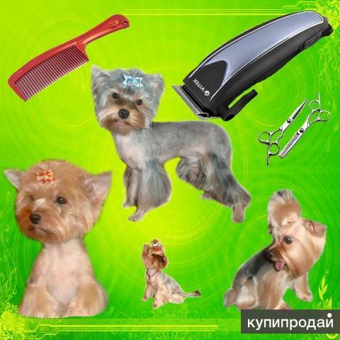 Стрижки маленьких собачек и кошек. Услуги грумера.Чистка зубов ультразвуком