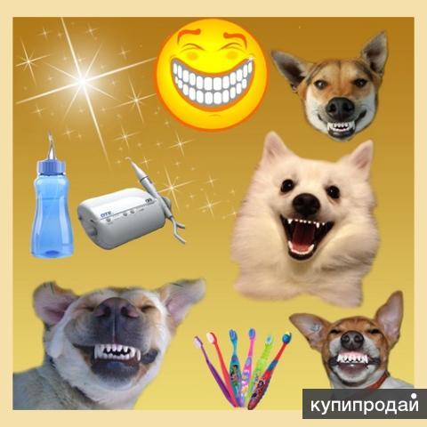 Чистка зубов у собак ультразвуком без боли