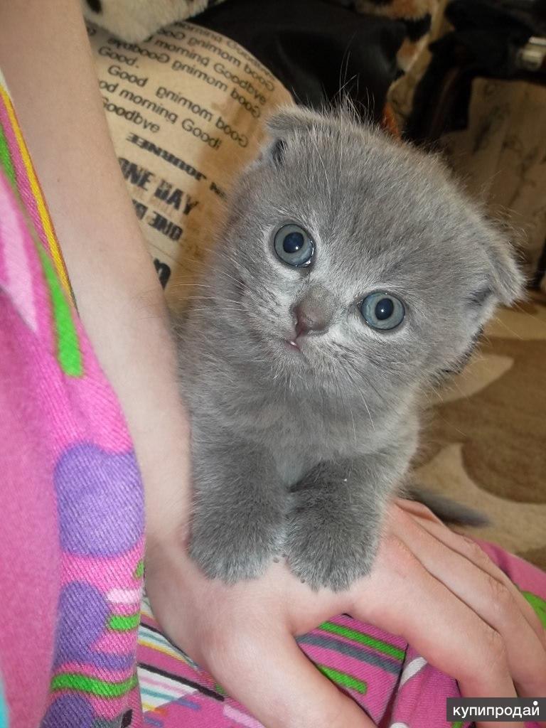 продаются очаровательные котятки ))))