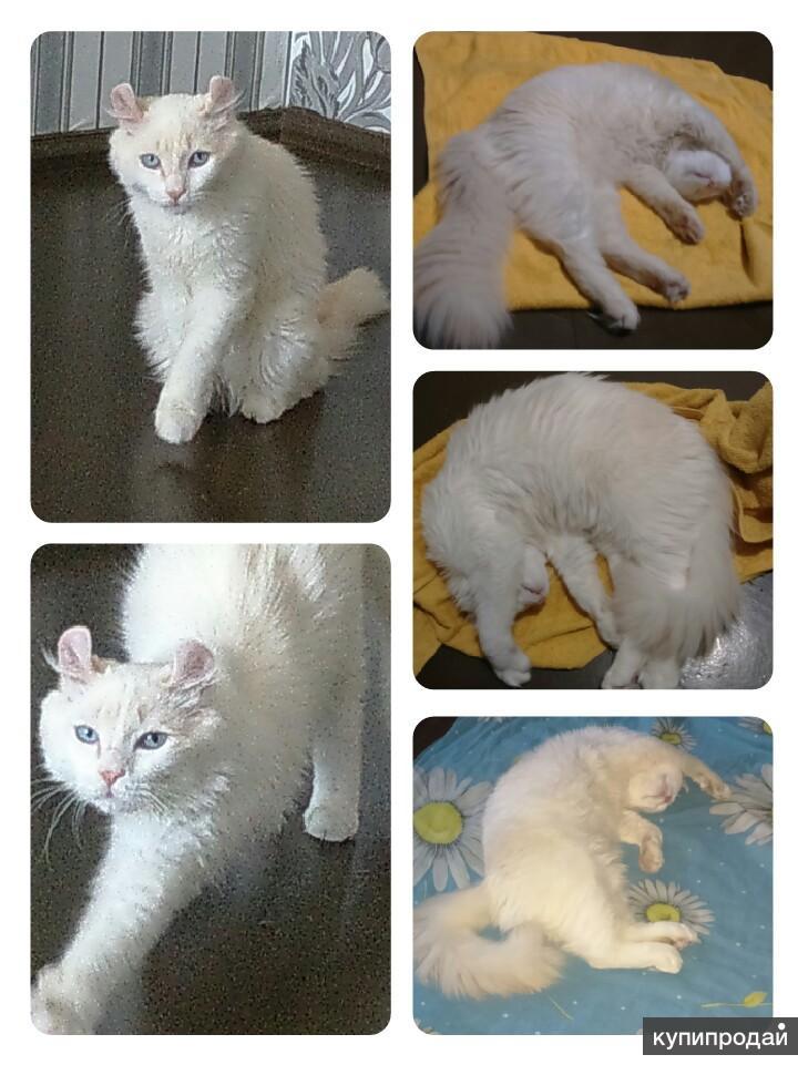 Кот 8 месяцев