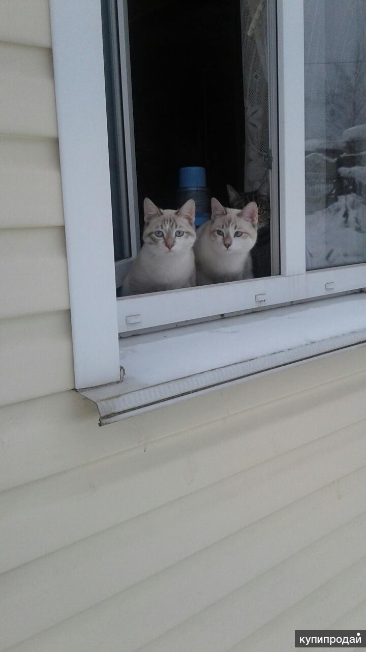 Молодые котики-близнецы ищут дом